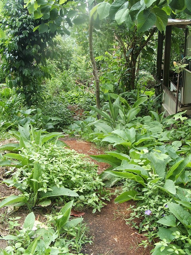 Permaculture And Food Forest Gardens Native Plant Talk: Creating A Food Forest Garden